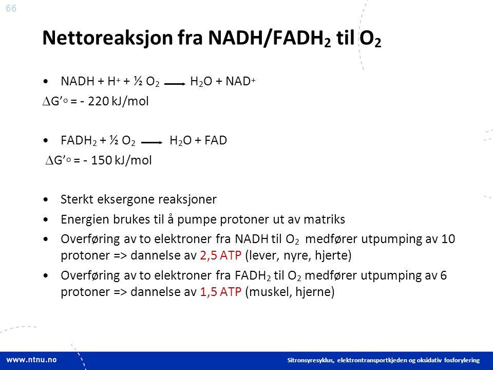 66 Nettoreaksjon fra NADH/FADH 2 til O 2 NADH + H + + ½ O 2 H 2 O + NAD +  G' o = - 220 kJ/mol FADH 2 + ½ O 2 H 2 O + FAD  G' o = - 150 kJ/mol Sterkt eksergone reaksjoner Energien brukes til å pumpe protoner ut av matriks Overføring av to elektroner fra NADH til O 2 medfører utpumping av 10 protoner => dannelse av 2,5 ATP (lever, nyre, hjerte) Overføring av to elektroner fra FADH 2 til O 2 medfører utpumping av 6 protoner => dannelse av 1,5 ATP (muskel, hjerne) Sitronsyresyklus, elektrontransportkjeden og oksidativ fosforylering