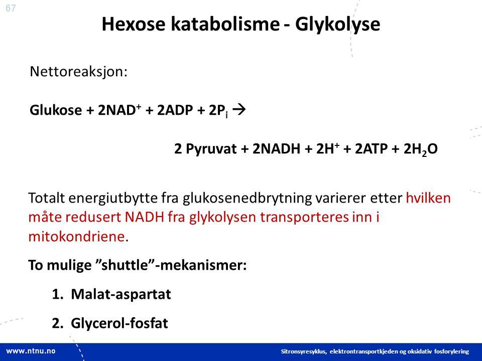 67 Nettoreaksjon: Glukose + 2NAD + + 2ADP + 2P i  2 Pyruvat + 2NADH + 2H + + 2ATP + 2H 2 O Hexose katabolisme - Glykolyse Sitronsyresyklus, elektrontransportkjeden og oksidativ fosforylering Totalt energiutbytte fra glukosenedbrytning varierer etter hvilken måte redusert NADH fra glykolysen transporteres inn i mitokondriene.