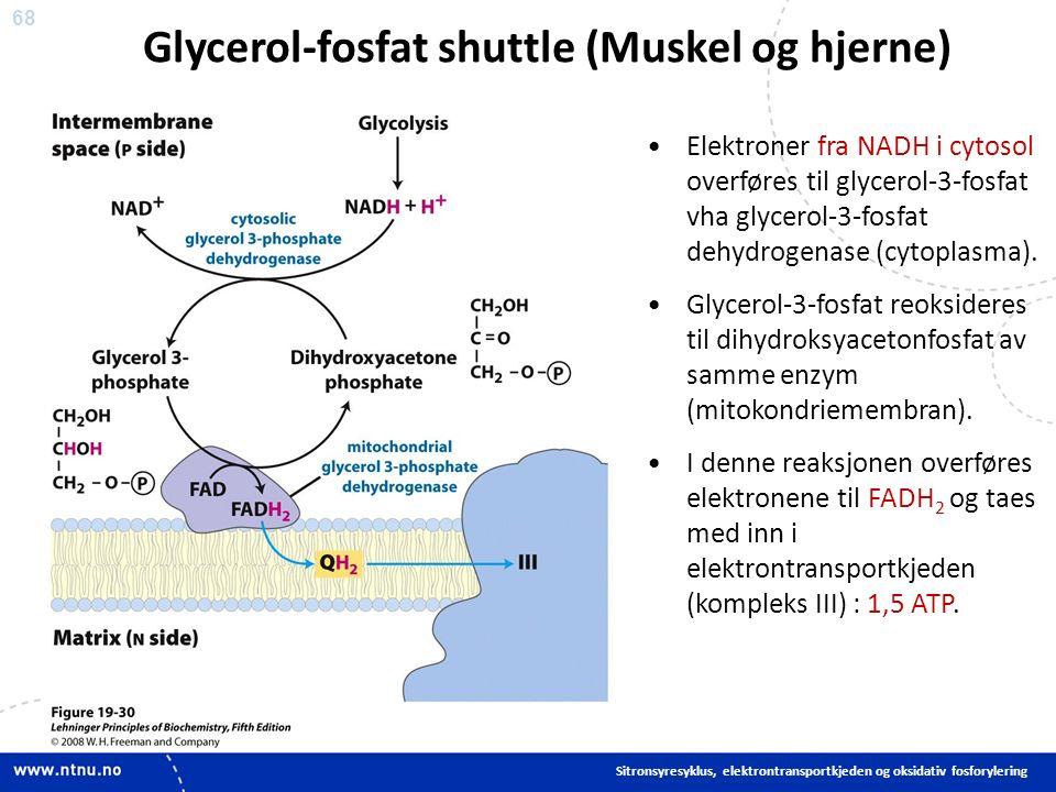 68 Elektroner fra NADH i cytosol overføres til glycerol-3-fosfat vha glycerol-3-fosfat dehydrogenase (cytoplasma).