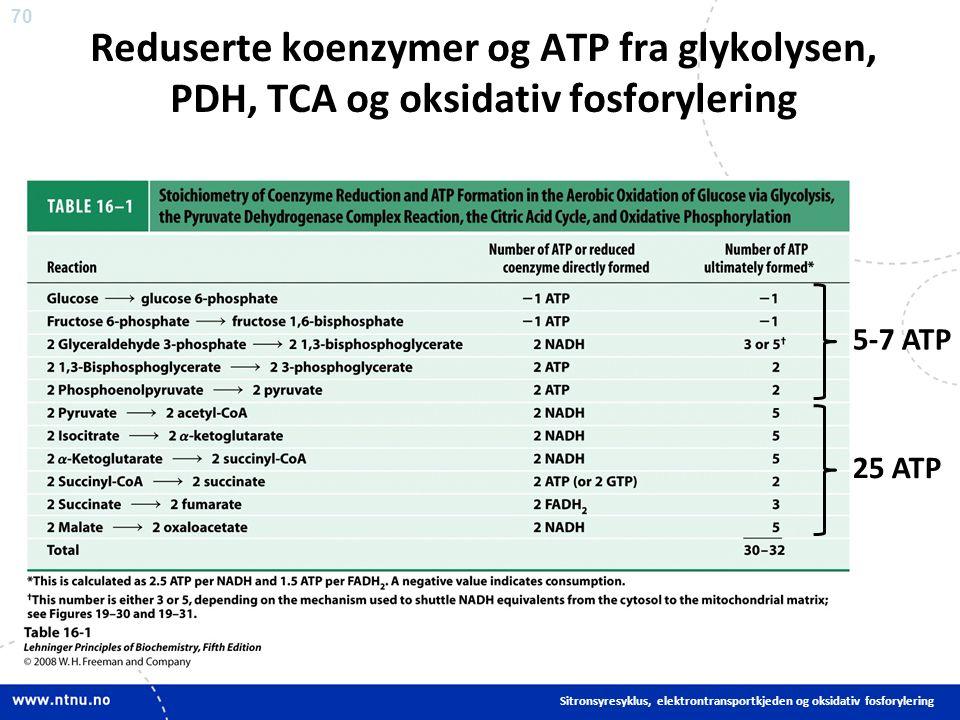 70 Sitronsyresyklus, elektrontransportkjeden og oksidativ fosforylering Reduserte koenzymer og ATP fra glykolysen, PDH, TCA og oksidativ fosforylering 5-7 ATP 25 ATP