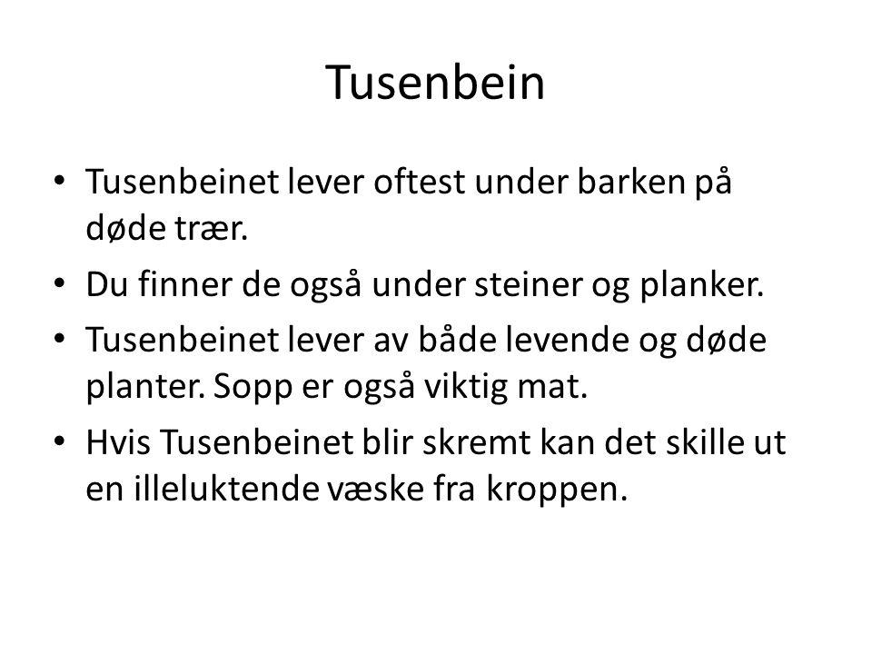 Tusenbein Tusenbeinet lever oftest under barken på døde trær.