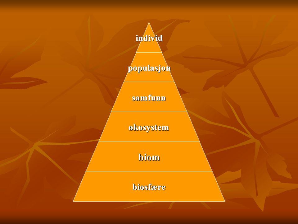 individpopulasjon samfunn økosystem biom biosfære