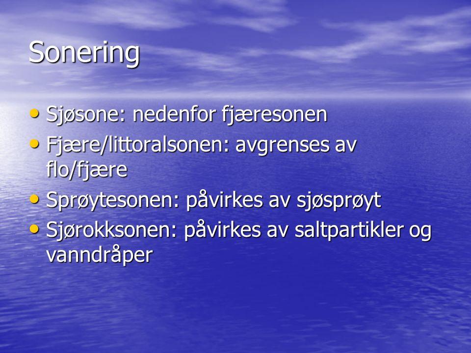 Sonering Sjøsone: nedenfor fjæresonen Sjøsone: nedenfor fjæresonen Fjære/littoralsonen: avgrenses av flo/fjære Fjære/littoralsonen: avgrenses av flo/fjære Sprøytesonen: påvirkes av sjøsprøyt Sprøytesonen: påvirkes av sjøsprøyt Sjørokksonen: påvirkes av saltpartikler og vanndråper Sjørokksonen: påvirkes av saltpartikler og vanndråper