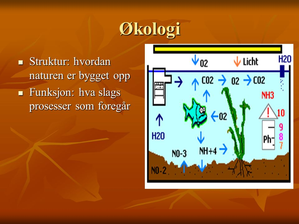 Økologi Struktur: hvordan naturen er bygget opp Struktur: hvordan naturen er bygget opp Funksjon: hva slags prosesser som foregår Funksjon: hva slags prosesser som foregår