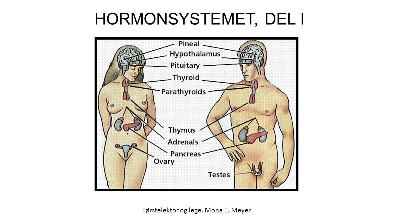 HORMONSYSTEMET, DEL I Førstelektor og lege, Mona E. Meyer
