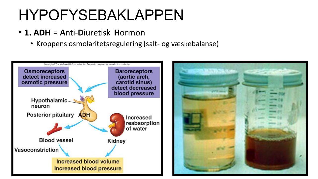 12 HYPOFYSEBAKLAPPEN 1.