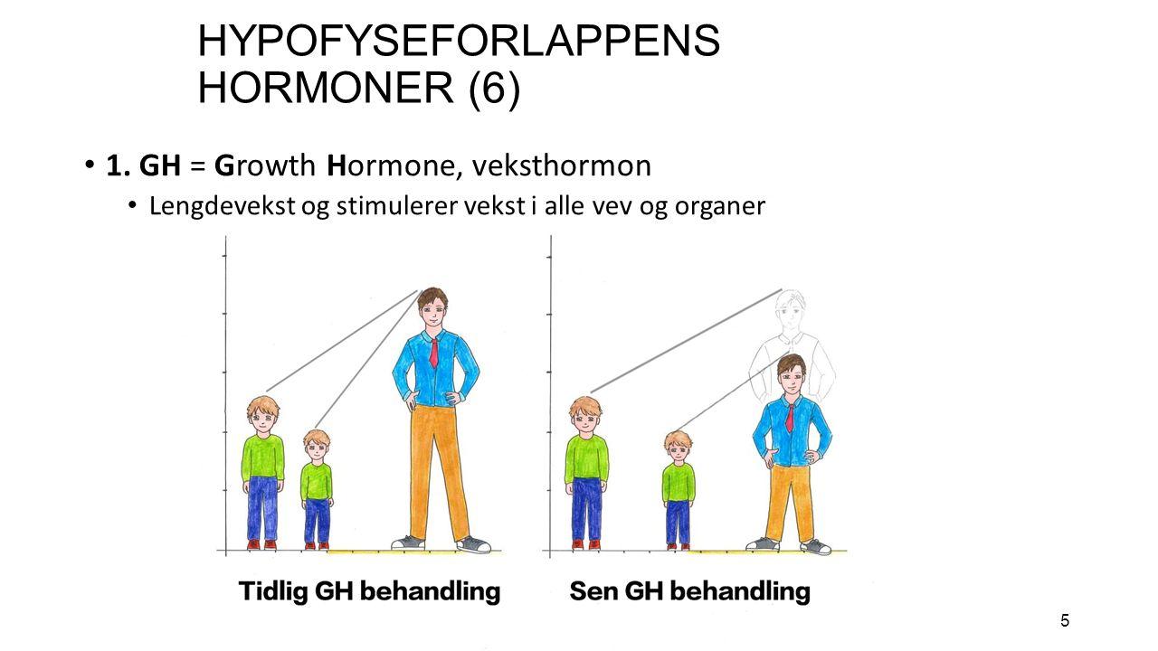 5 HYPOFYSEFORLAPPENS HORMONER (6) 1.