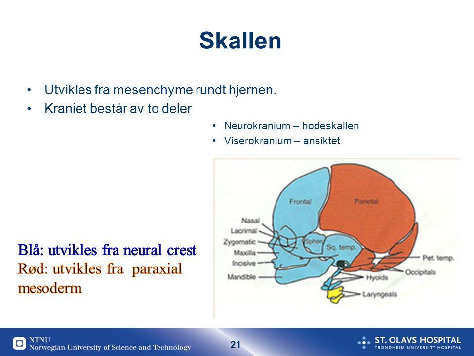 21 Skallen Utvikles fra mesenchyme rundt hjernen. Kraniet består av to deler Neurokranium – hodeskallen Viserokranium – ansiktet