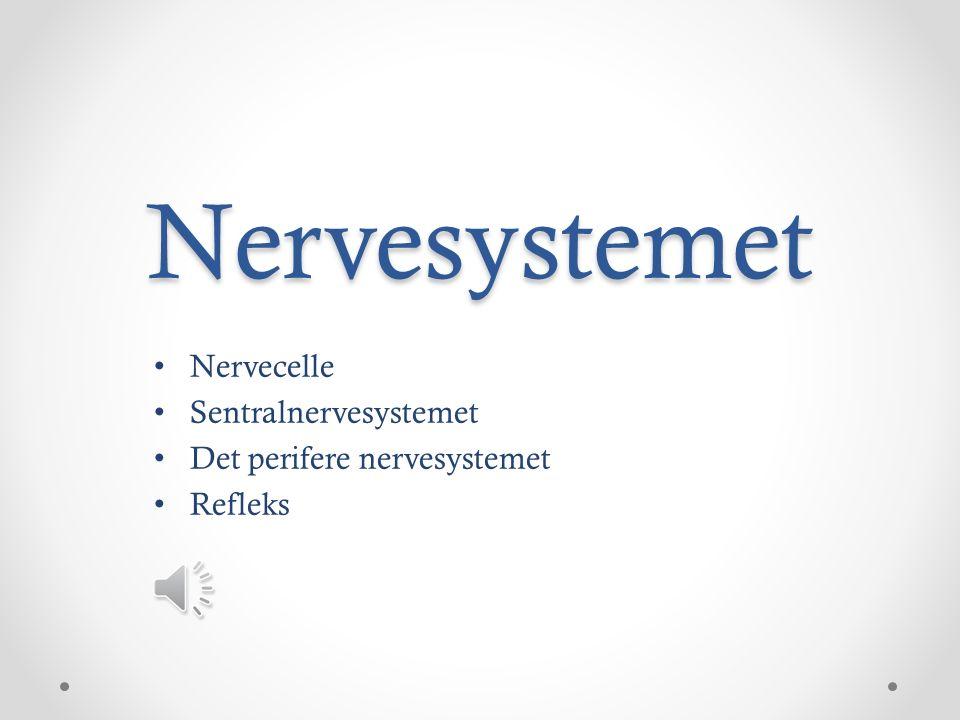 Nervesystemet Nervecelle Sentralnervesystemet Det perifere nervesystemet Refleks