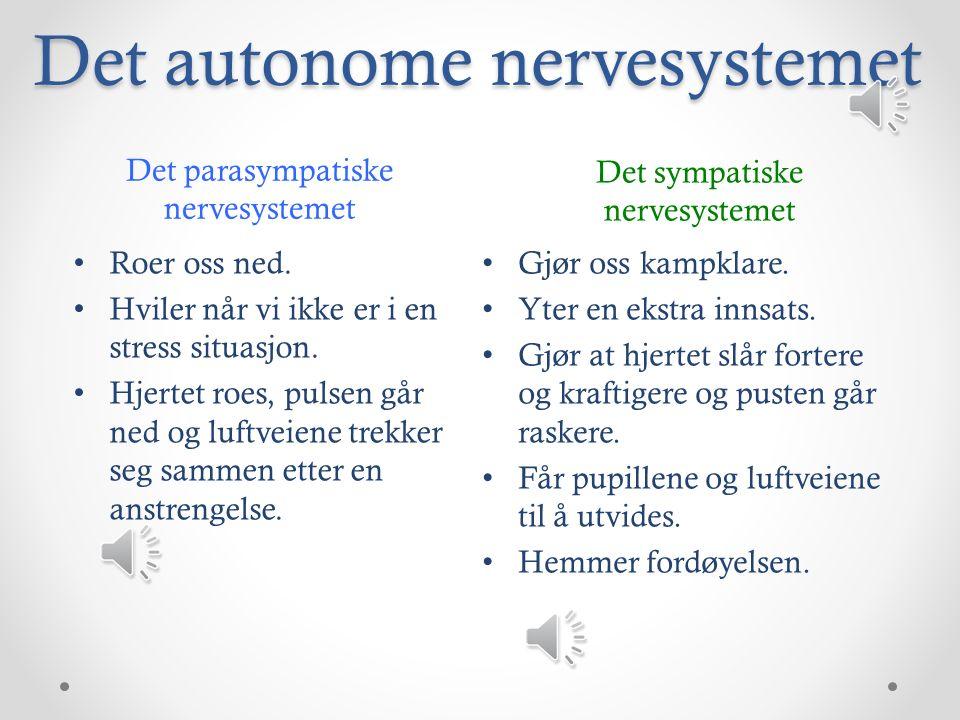 Det autonome nervesystemet Det sympatiske nervesystemet Det parasympatiske nervesystemet Roer oss ned.
