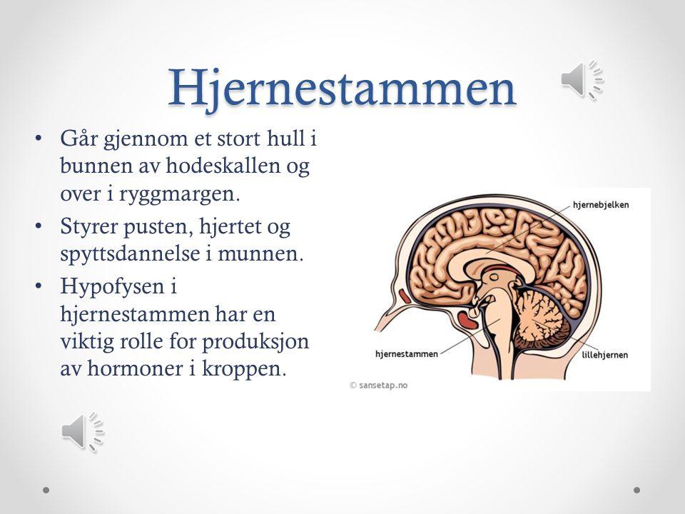 Storehjernen Består av nervecellekropper.