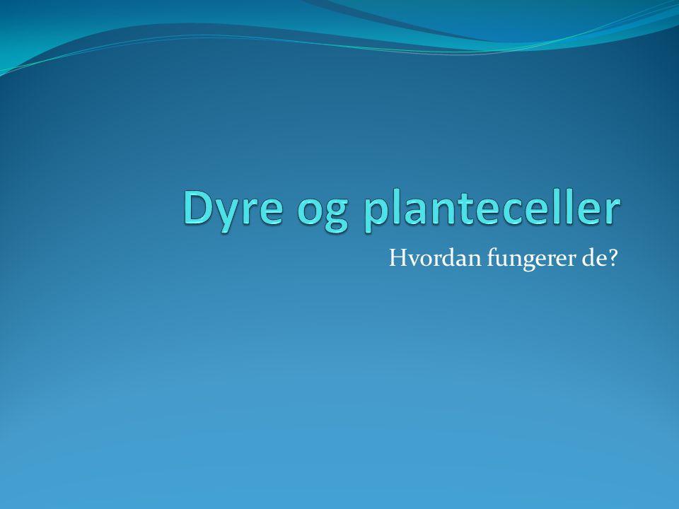 Plantecelle