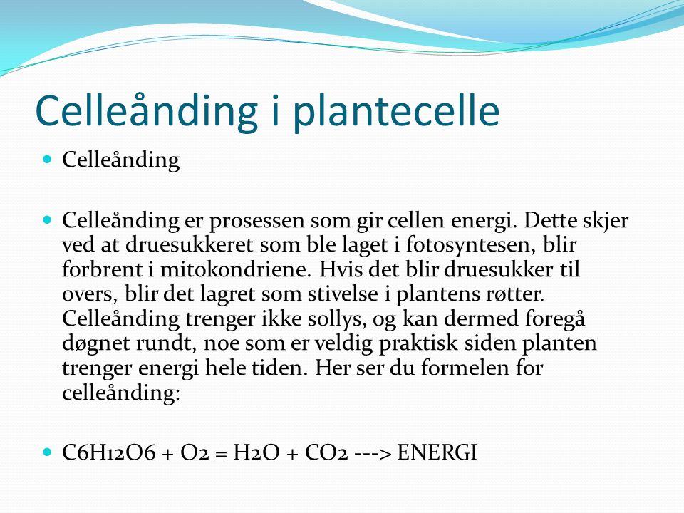 Celleånding i plantecelle Celleånding Celleånding er prosessen som gir cellen energi.