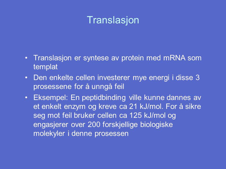 Translasjon Translasjon er syntese av protein med mRNA som templat Den enkelte cellen investerer mye energi i disse 3 prosessene for å unngå feil Ekse