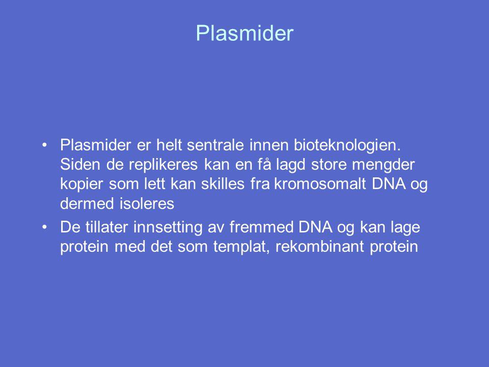 Plasmider Plasmider er helt sentrale innen bioteknologien. Siden de replikeres kan en få lagd store mengder kopier som lett kan skilles fra kromosomal