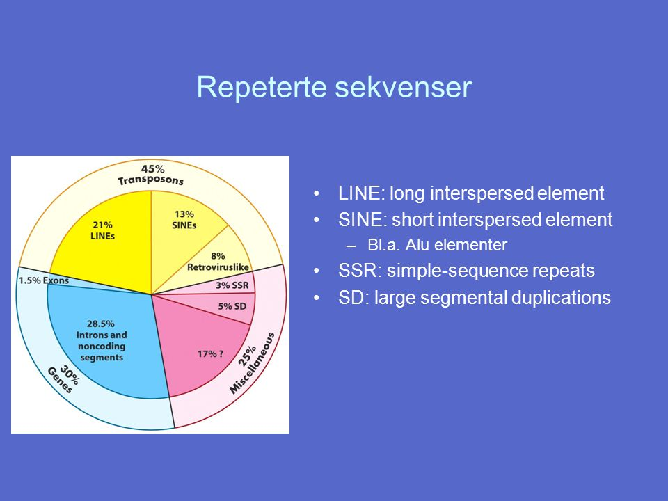 Repeterte sekvenser LINE: long interspersed element SINE: short interspersed element –Bl.a. Alu elementer SSR: simple-sequence repeats SD: large segme