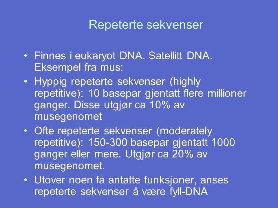 Repeterte sekvenser Finnes i eukaryot DNA. Satellitt DNA. Eksempel fra mus: Hyppig repeterte sekvenser (highly repetitive): 10 basepar gjentatt flere