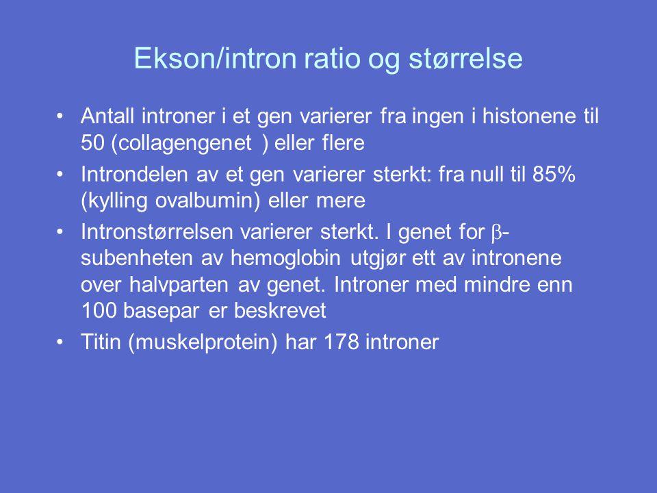 Ekson/intron ratio og størrelse Antall introner i et gen varierer fra ingen i histonene til 50 (collagengenet ) eller flere Introndelen av et gen vari