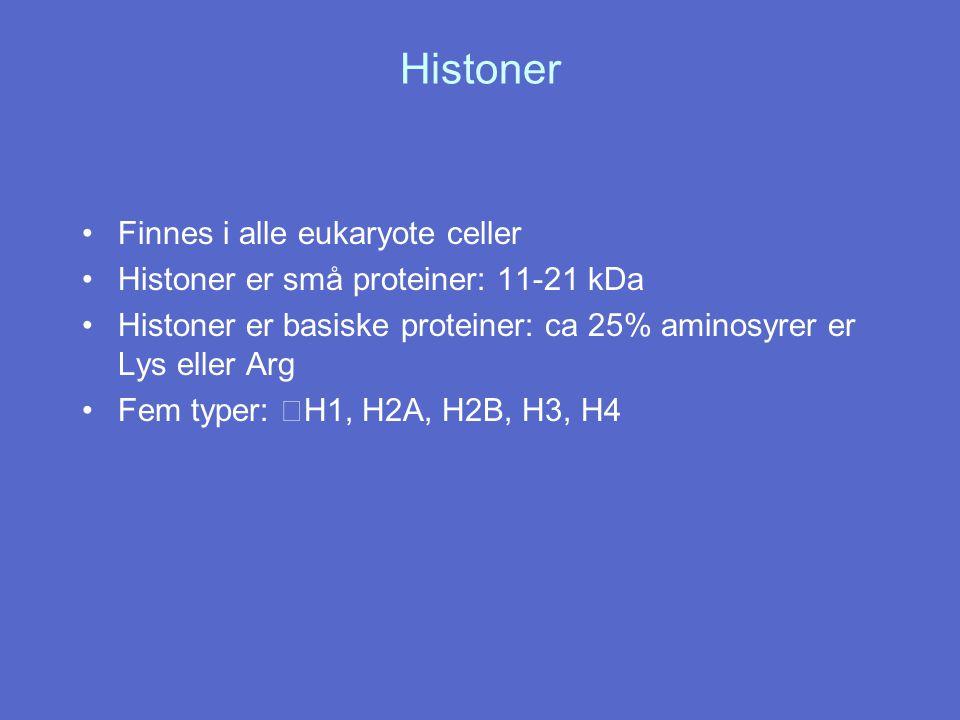 Histoner Finnes i alle eukaryote celler Histoner er små proteiner: 11-21 kDa Histoner er basiske proteiner: ca 25% aminosyrer er Lys eller Arg Fem typ