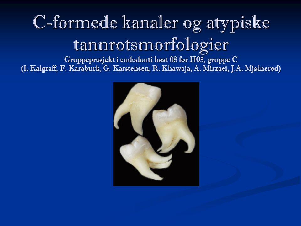 C-formede kanaler og atypiske tannrotsmorfologier Gruppeprosjekt i endodonti høst 08 for H05, gruppe C (I. Kalgraff, F. Karaburk, G. Karstensen, R. Kh