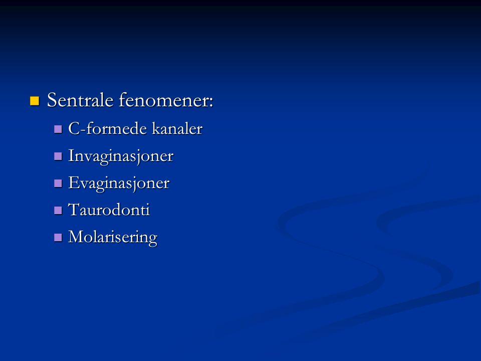 Sentrale fenomener: Sentrale fenomener: C-formede kanaler C-formede kanaler Invaginasjoner Invaginasjoner Evaginasjoner Evaginasjoner Taurodonti Tauro