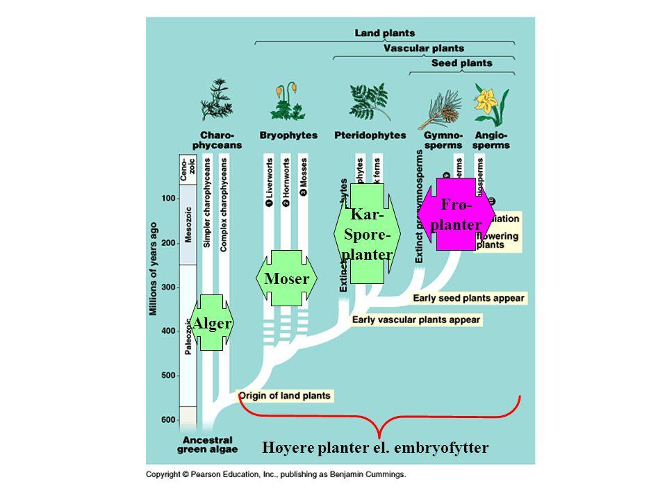 Høyere planter el. embryofytter Alger Moser Kar- Spore- planter Frø- planter