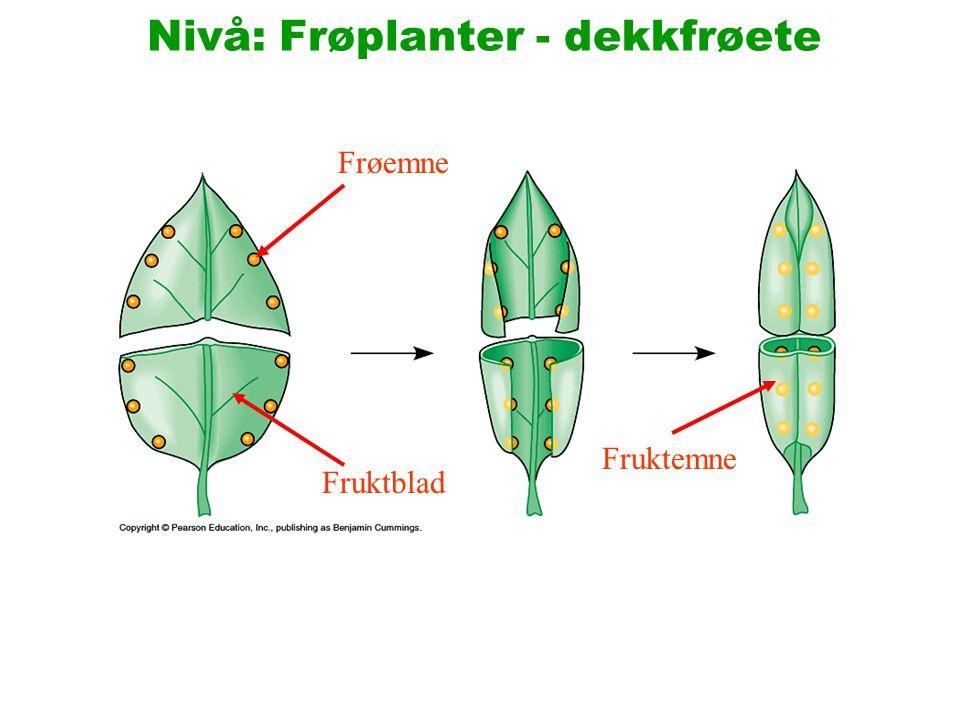 Nivå: Frøplanter - dekkfrøete Archaefructus den mest primitive, kjente dekkfrøete.
