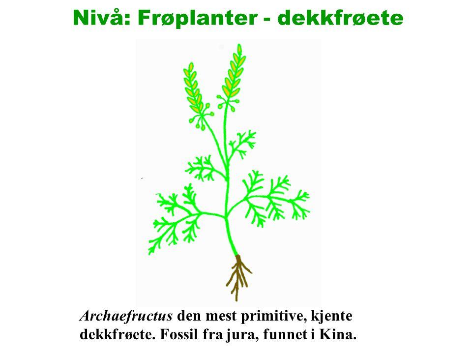 De dekkfrøete utviklet seg på ruinene av kritts nakenfrøete vegetasjon.
