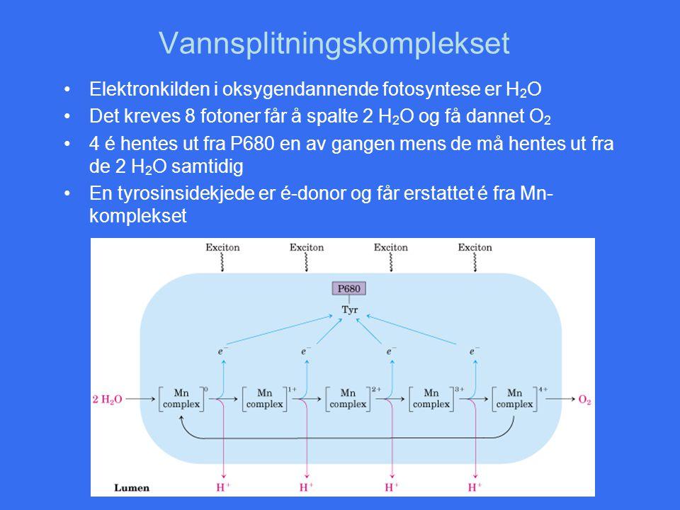 Vannsplitningskomplekset Elektronkilden i oksygendannende fotosyntese er H 2 O Det kreves 8 fotoner får å spalte 2 H 2 O og få dannet O 2 4 é hentes u