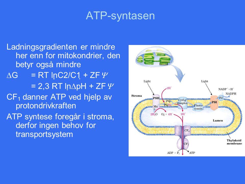 ATP-syntasen Ladningsgradienten er mindre her enn for mitokondrier, den betyr også mindre  G = RT lnC2/C1 + ZF  = 2,3 RT ln  pH + ZF  CF 1 dan