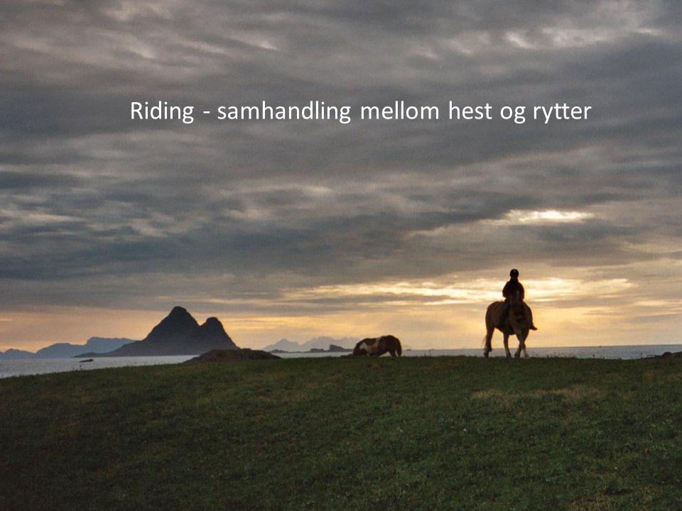 Riding - samhandling mellom hest og rytter