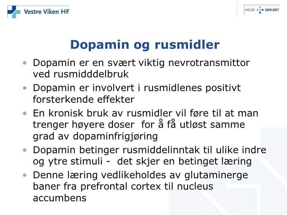 Dopamin og rusmidler •Dopamin er en svært viktig nevrotransmittor ved rusmidddelbruk •Dopamin er involvert i rusmidlenes positivt forsterkende effekte