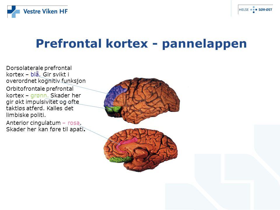 Prefrontal kortex - pannelappen Dorsolaterale prefrontal kortex – blå. Gir svikt i overordnet kognitiv funksjon Orbitofrontale prefrontal kortex – grø