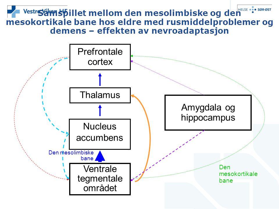 Samspillet mellom den mesolimbiske og den mesokortikale bane hos eldre med rusmiddelproblemer og demens – effekten av nevroadaptasjon Prefrontale cort