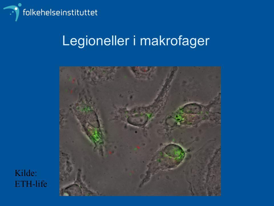 Legioneller i makrofager Kilde: ETH-life