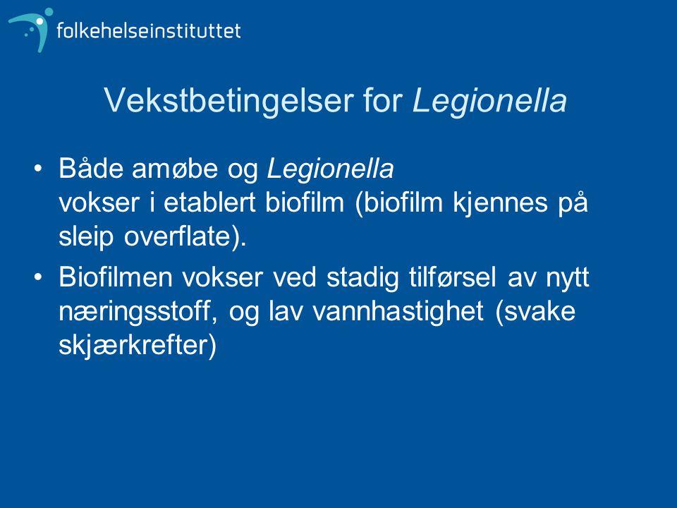 Vekstbetingelser for Legionella •Både amøbe og Legionella vokser i etablert biofilm (biofilm kjennes på sleip overflate). •Biofilmen vokser ved stadig