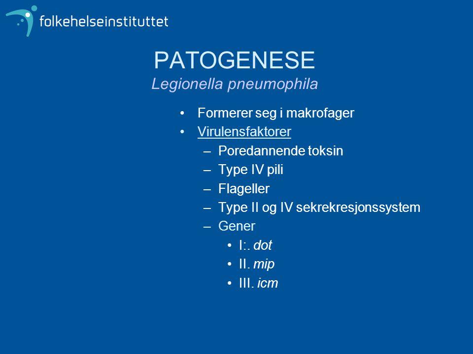 PATOGENESE Legionella pneumophila •Formerer seg i makrofager •Virulensfaktorer –Poredannende toksin –Type IV pili –Flageller –Type II og IV sekrekresj