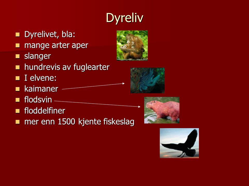 Dyreliv  Dyrelivet, bla:  mange arter aper  slanger  hundrevis av fuglearter  I elvene:  kaimaner  flodsvin  floddelfiner  mer enn 1500 kjente fiskeslag