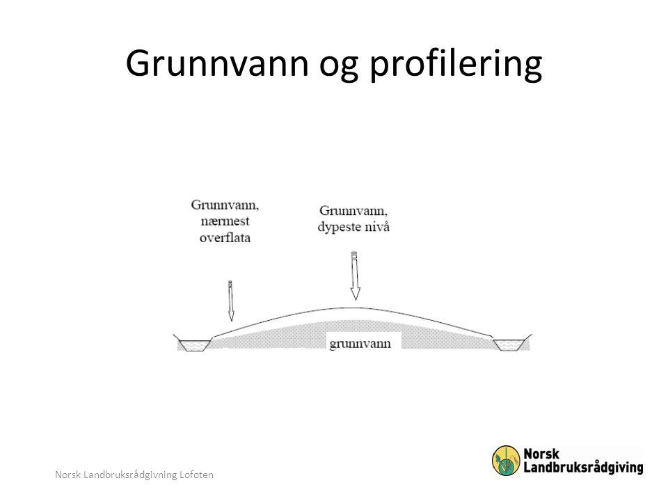 Grunnvann og profilering Norsk Landbruksrådgivning Lofoten
