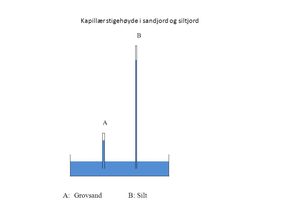 B A A: GrovsandB:Silt Kapillær stigehøyde i sandjord og siltjord