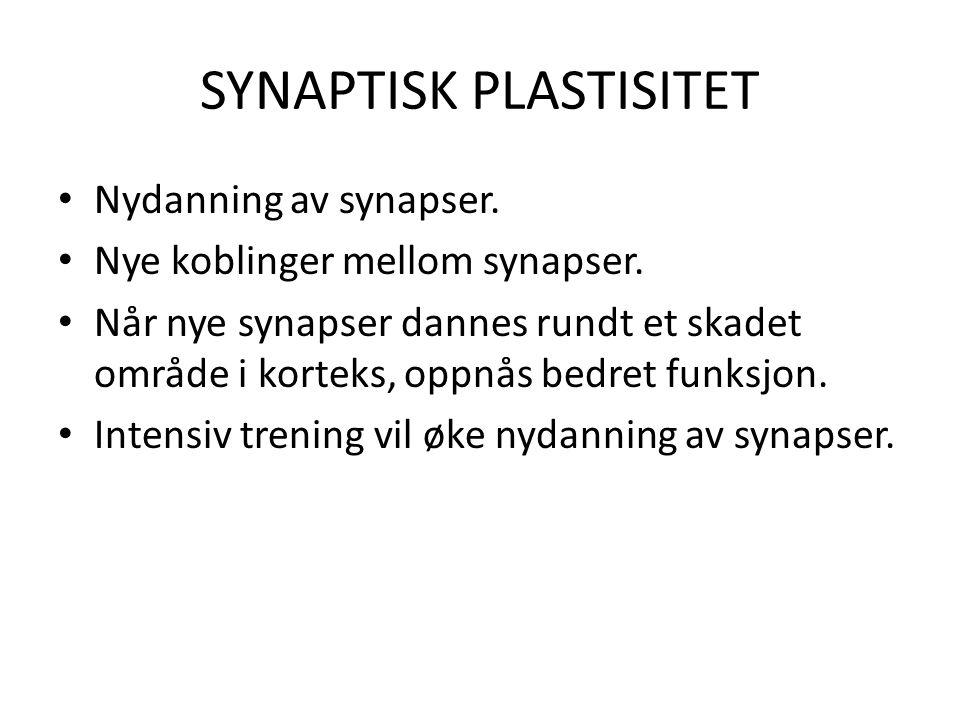 SYNAPTISK PLASTISITET • Nydanning av synapser. • Nye koblinger mellom synapser. • Når nye synapser dannes rundt et skadet område i korteks, oppnås bed