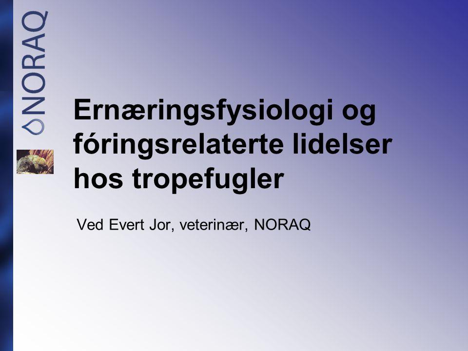 Ernæringsfysiologi og fóringsrelaterte lidelser hos tropefugler Ved Evert Jor, veterinær, NORAQ