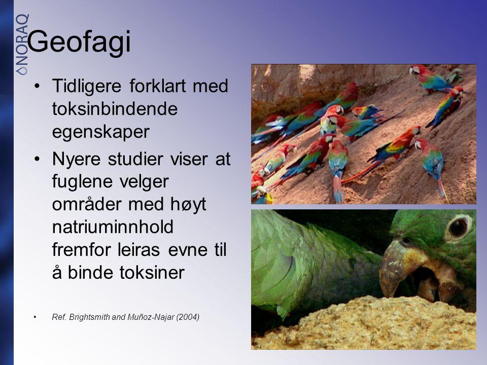 Geofagi •Tidligere forklart med toksinbindende egenskaper •Nyere studier viser at fuglene velger områder med høyt natriuminnhold fremfor leiras evne t