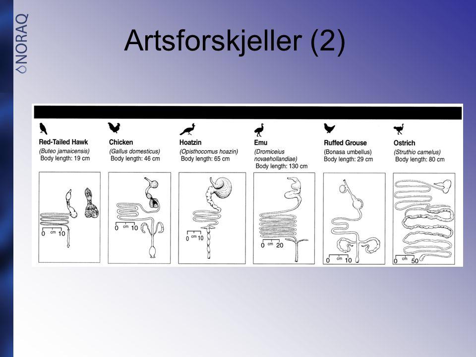 Artsforskjeller (2)