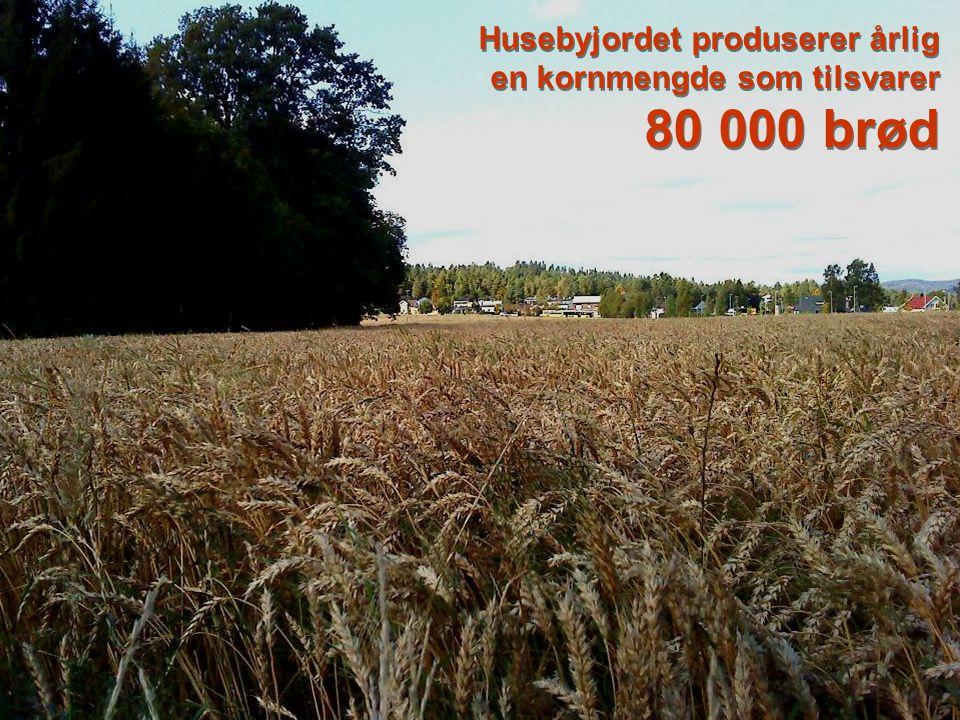 Jordbruk Husebyjordet har matjord av meget høy kvalitet som benyttes til matproduksjon