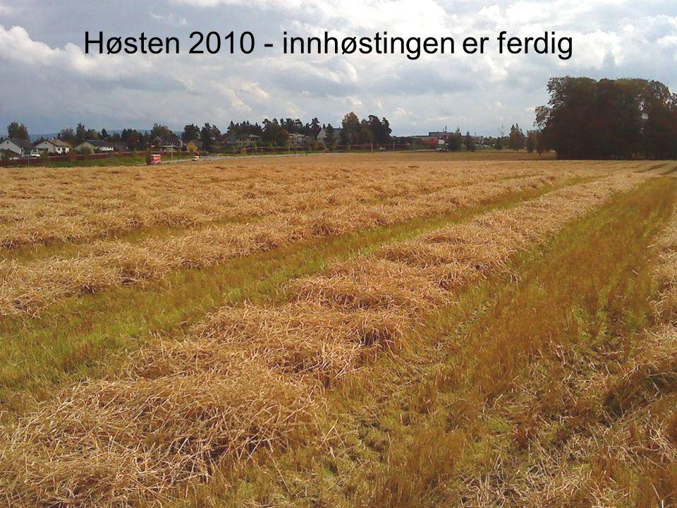 Husebyjordet produserer årlig en kornmengde som tilsvarer 80 000 brød