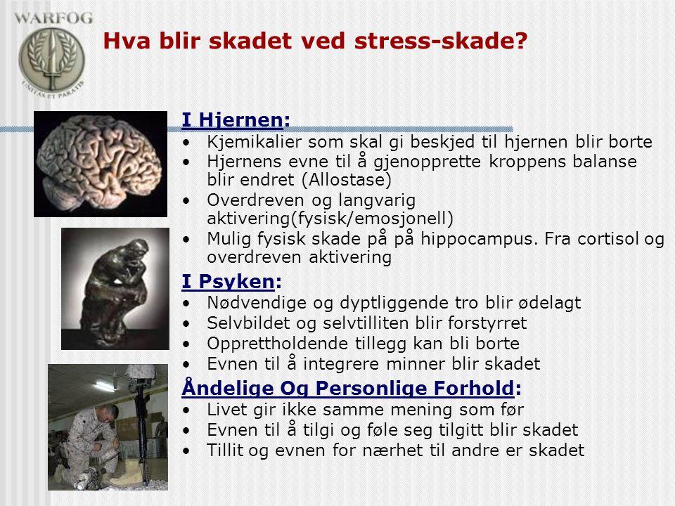 I Hjernen: •Kjemikalier som skal gi beskjed til hjernen blir borte •Hjernens evne til å gjenopprette kroppens balanse blir endret (Allostase) •Overdre