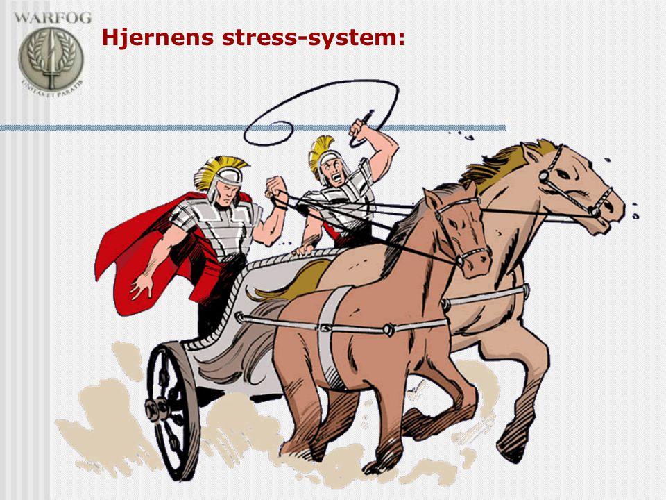 Hjernens stress-system: