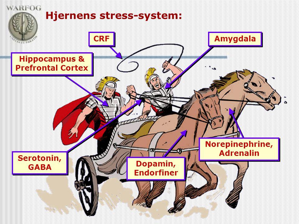 Norepinephrine, Adrenalin Dopamin, Endorfiner Hippocampus & Prefrontal Cortex Amygdala Hjernens stress-system: Serotonin, GABA CRF