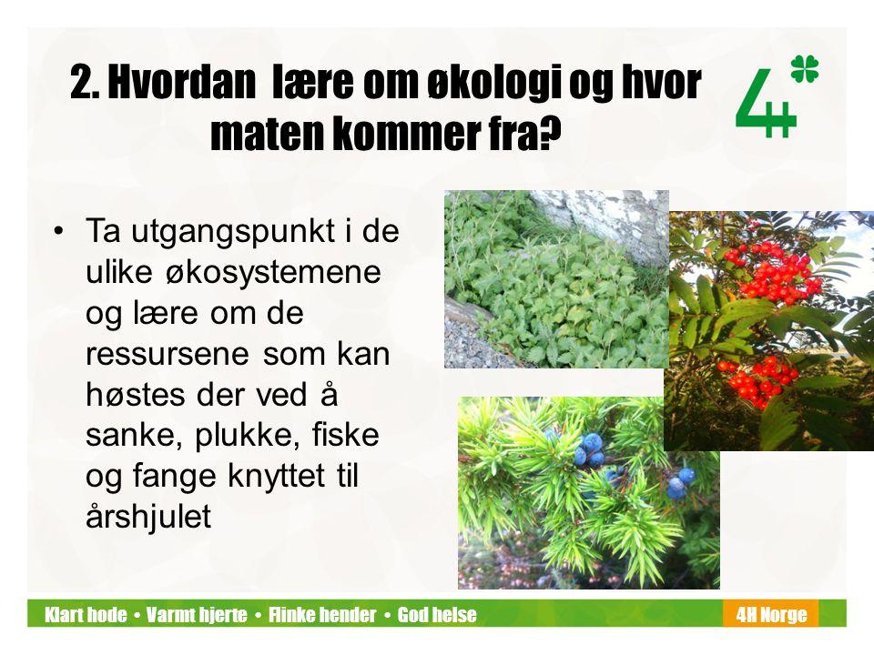 Klart hode • Varmt hjerte • Flinke hender • God helse4H Norge 2. Hvordan lære om økologi og hvor maten kommer fra? •Ta utgangspunkt i de ulike økosyst